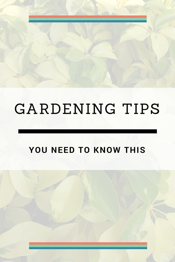 Container Gardening – Grow A Successful Garden By Following These Hints – Gardening