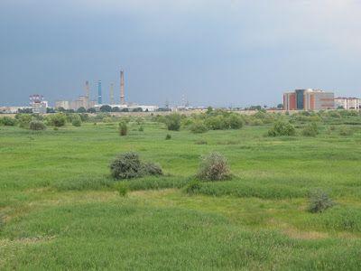 Verde de Bucureşti