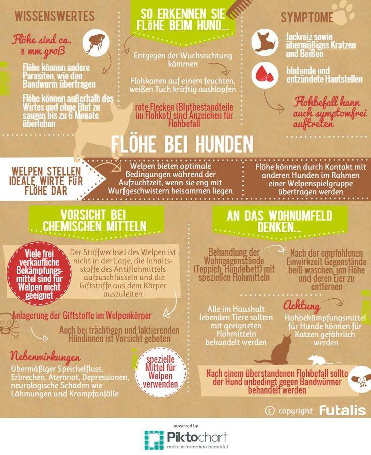 Alle wichtigen Informationen zum Flohbefall auf einen Blick: http://futalis.de/hunderatgeber/welpen/krankheiten/floehe