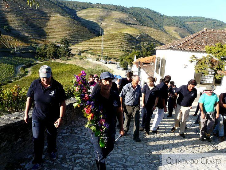 Harvest 2014, Quinta do Crasto, Douro, Portugal
