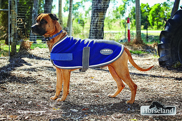 Sarge from Animal Aid helped us out by modelling the new WeatherBeeta dog coats, this colour will suit any dog!