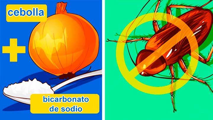 M s de 25 ideas incre bles sobre plaga de cucarachas en - Como matar las moscas de mi casa ...