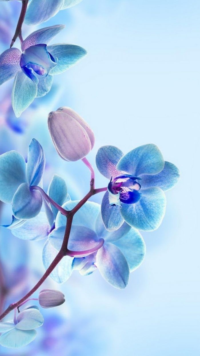 3d Flower Hd Wallpapers For Mobile 1080x1920 3d Wallpaper For Mobile Hd Wallpapers For Mobile Blue Flower Wallpaper