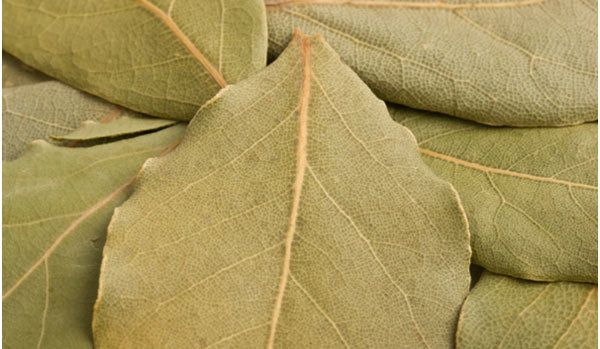 Insect Repellent: Bay leaves are a great insect repellent as they contain lauric acid. A dish of bay leaves will ward off insects. A paste made from crushed leaves and little oil relieves stings and bites when applied topically.