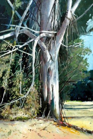 Gum tree painted by SA artist John Smith