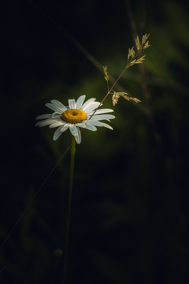 Photograph Fight For The Light by Paul Barson on 500px