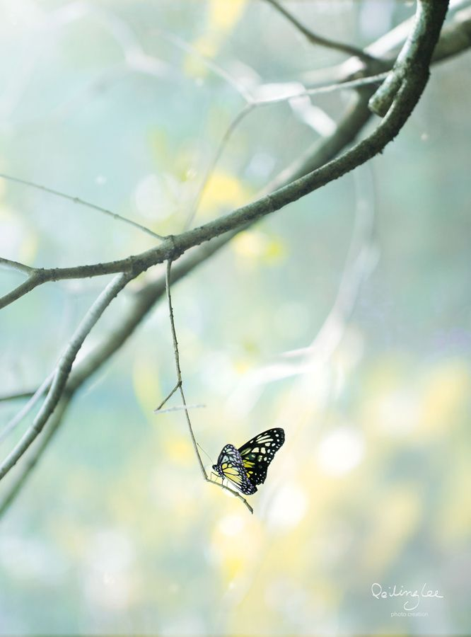 butterfly | nature + insect photography