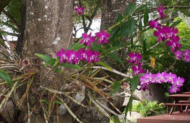 PASSO A PASSO - CULTIVAR ORQUÍDEAS ! CLIQUE E SAIBA MAIS NO SITE ! Das flores mais belas , aprenda com quem tem 20 anos de cultivo ! Tudo de bom !  #flores #orquídeas #flowers