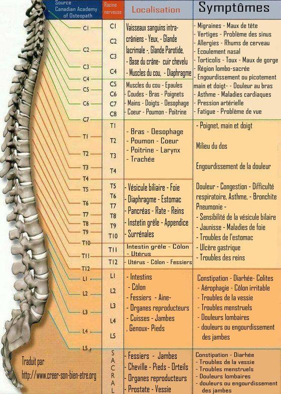ZOOM sur les symptômes liés aux maux de dos (Selon les vertèbres touchés)