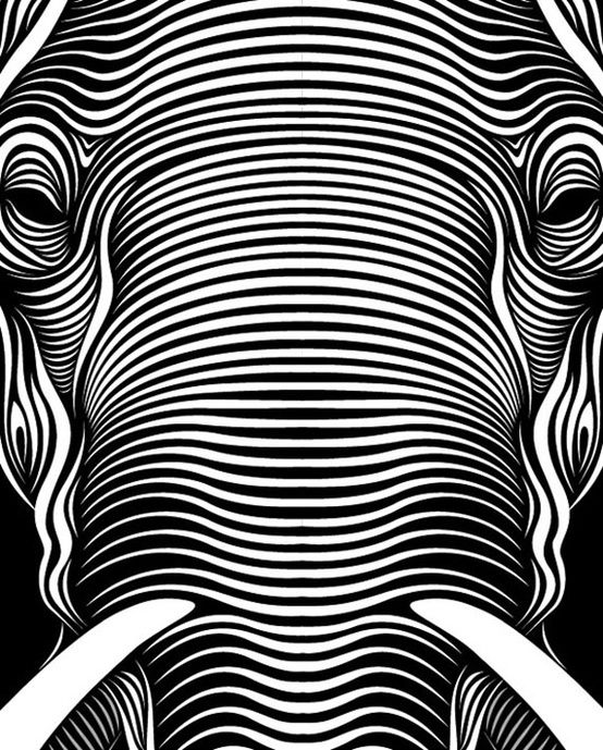 line element-cross contour lines, elephant created purely from lines. Amazing