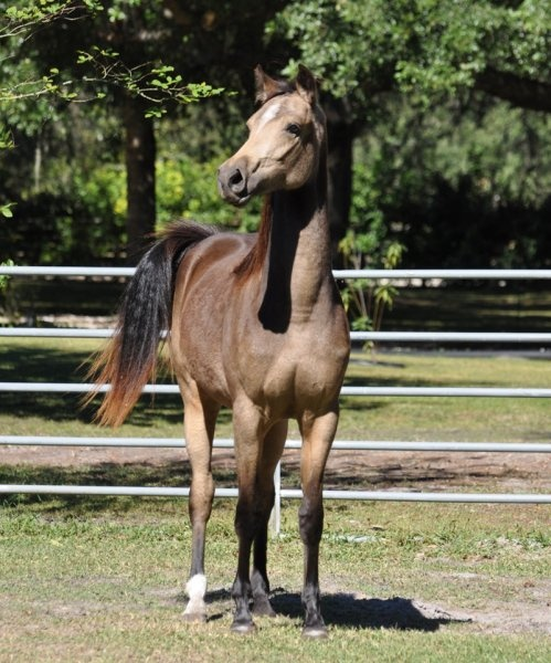 How to determain a foals mature height? - Horsetopia