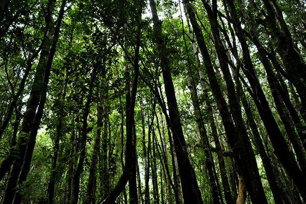 Bosque en Coñaripe