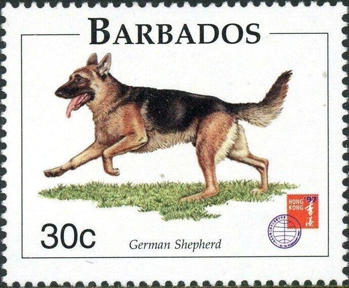 German Shepherd Canis Lupus Familiaris In 2020 Postage Stamp Art Postage Stamps Stamp