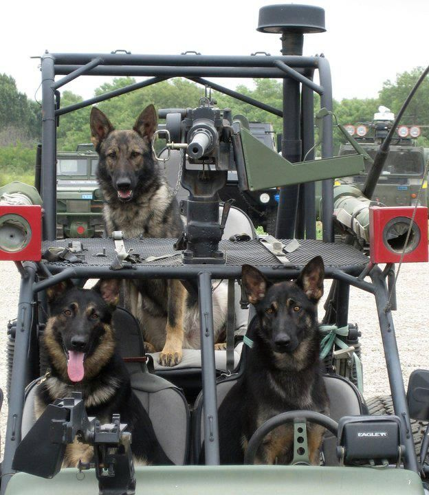 Celebrating One Year of Military Working Dogs in Photos