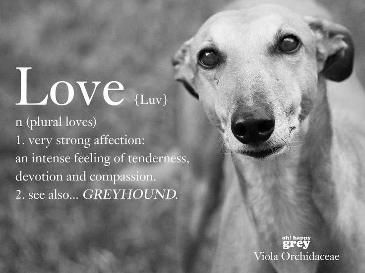 Support your local greyhound rescue.