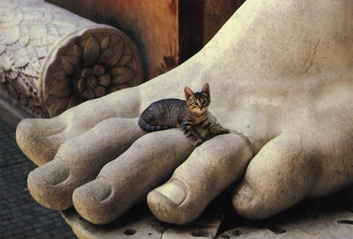 Cat on Constantine---Rome. I keep waiting for the statue's toes to wiggle.