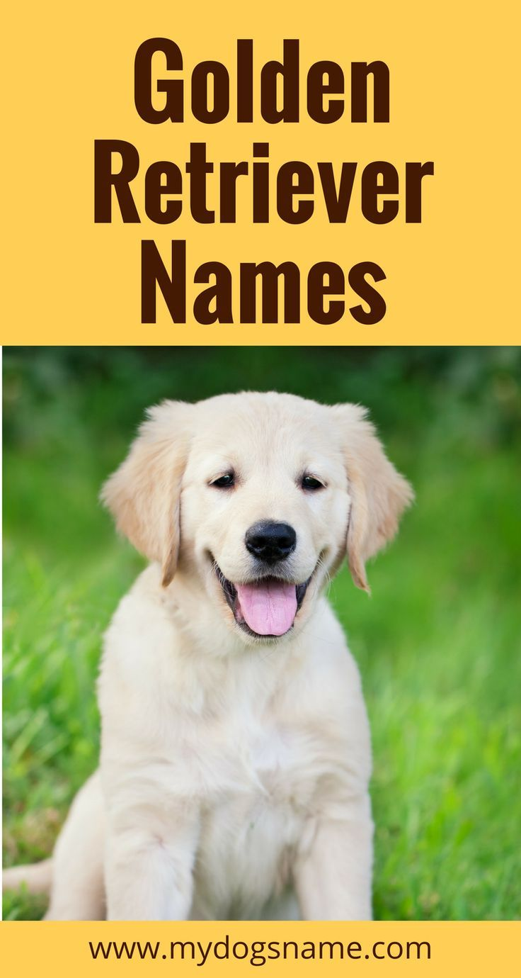 The Best Golden Retriever Names 110 Names For Your Golden Golden Retriever Names Dog Names Golden Retriever