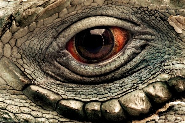 Google Image Result for http://msnbcmedia.msn.com/j/MSNBC/Components/Photo/_new/AT-Animals_Eyes_01.photoblog600.jpg