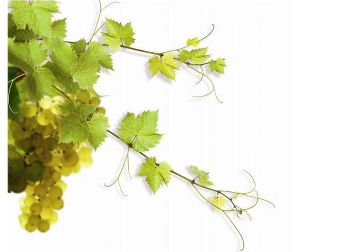 """Die Loire ist mit 1000 km der längste Fluss Frankreichs. Im Weinanbaugebiet Val de Loire, das auch den Beinamen """"Garten von Frankreich"""" trägt, wird schon seit dem 5. Jahrhundert Wein angebaut. Es umfasst mehrere Weinanbaugebiete,"""