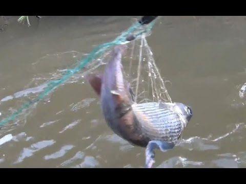 Рыбалка браконьерская сеть с хариусом в тайге