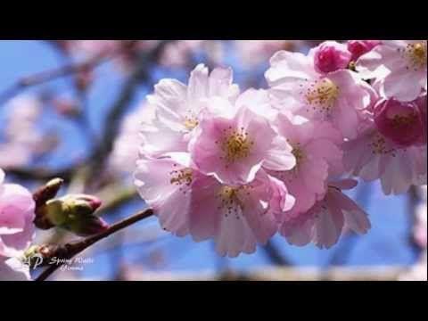 Music Monday: Spring Waltz, Yiruma – Leenie Brown #HerHeartsChoice