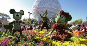 8 things Rookies miss at Walt Disney World