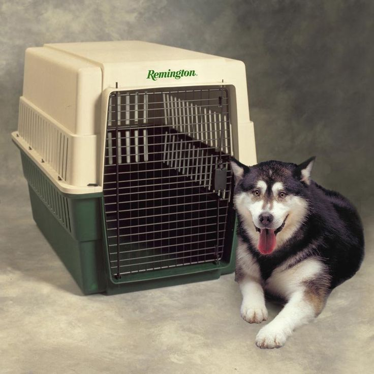 Likewise it is possible to go for dog crates for sale with respect to your dog's measurement. You always has the choice to purchase a little dog crate to your dog if you have a tiny dog that is calm and quiet.