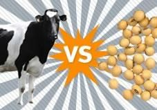 In this Greatist Debate, we investigate: When it comes to nutrition, which milk reigns supreme?