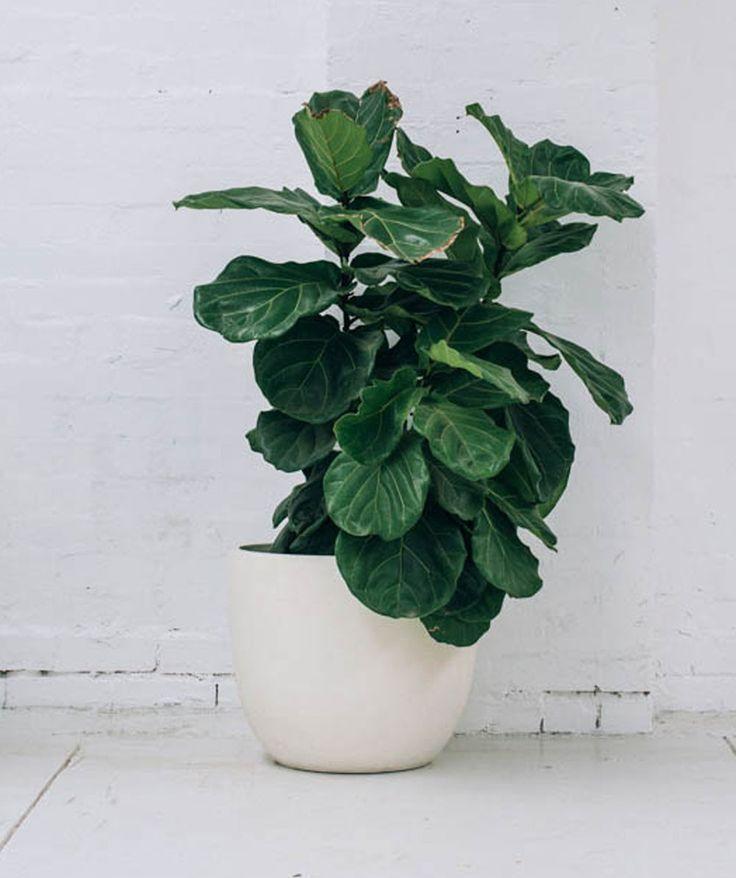 Plain White Pot. | http://www.huntingforgeorge.com