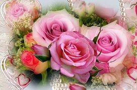 Fialové Růže, Rosebud, Srdíčka