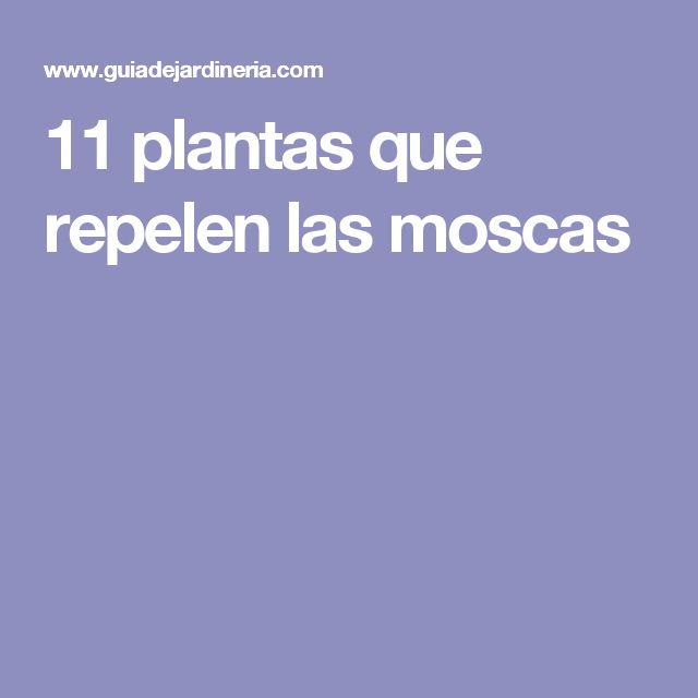 11 plantas que repelen las moscas
