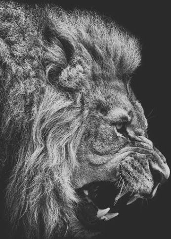 """Pin by AngelTruelove on !☆""""My BMS""""☆! Stay humble, Lion"""
