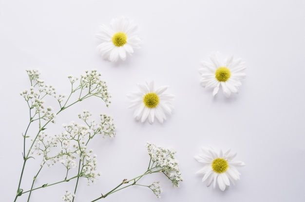 Download Delicate Composition Of Daisies And Baby S Breath Flowers For Free Babys Breath Flowers Daisy Flowers