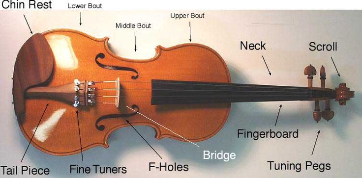 Buying Guide: How to Choose the Right Violin | The HUB