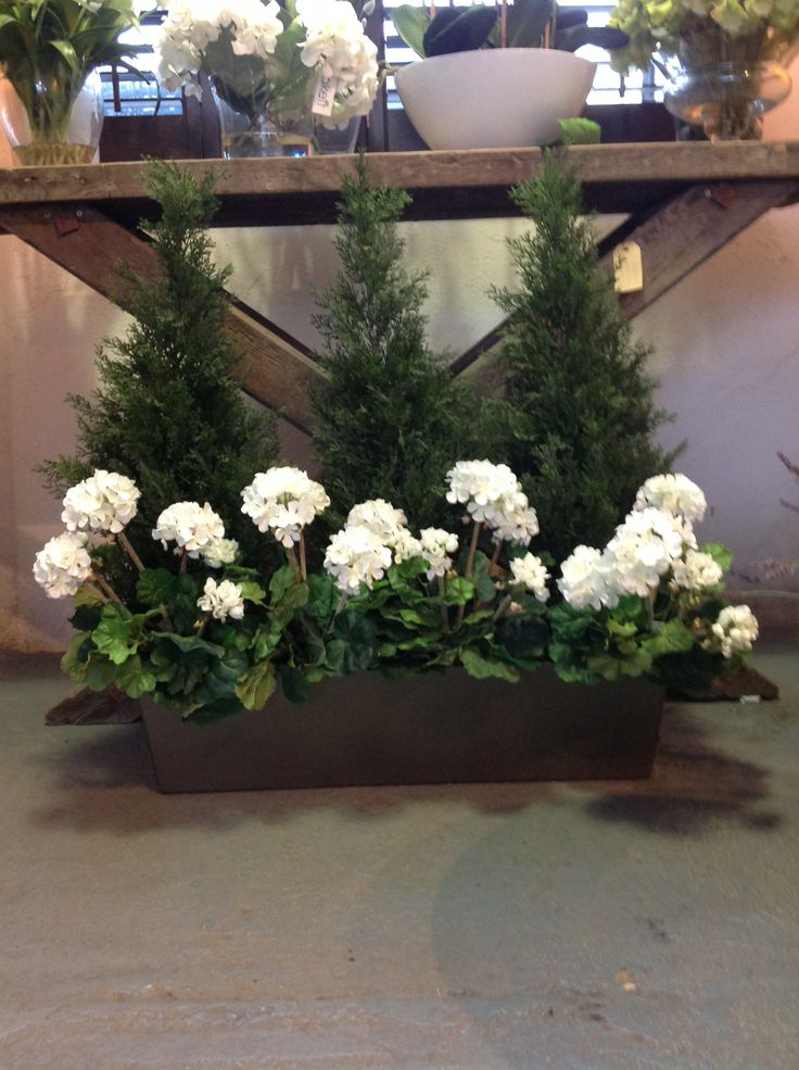 Cypress Fern Trees With White Geraniums Fake It Flower