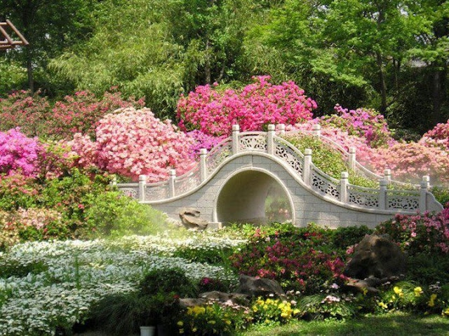 ...Over and under a river of flowers..