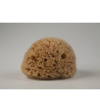 Natural mediterranean Honeycomb sea sponge 1214cm / by 111elies