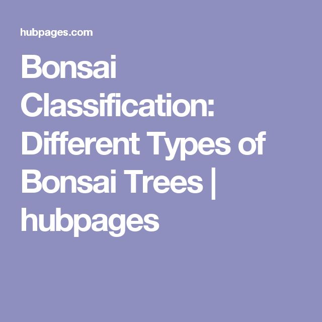 Bonsai Classification: Different Types of Bonsai Trees | hubpages