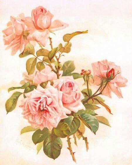 rose  pour mon coeur