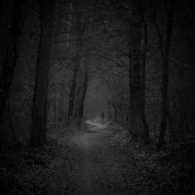 Dark Forest Path: He was on a narrow path with thick trees providing fairly good cover from the weather, but could prove to be dangerous in a powerful storm.