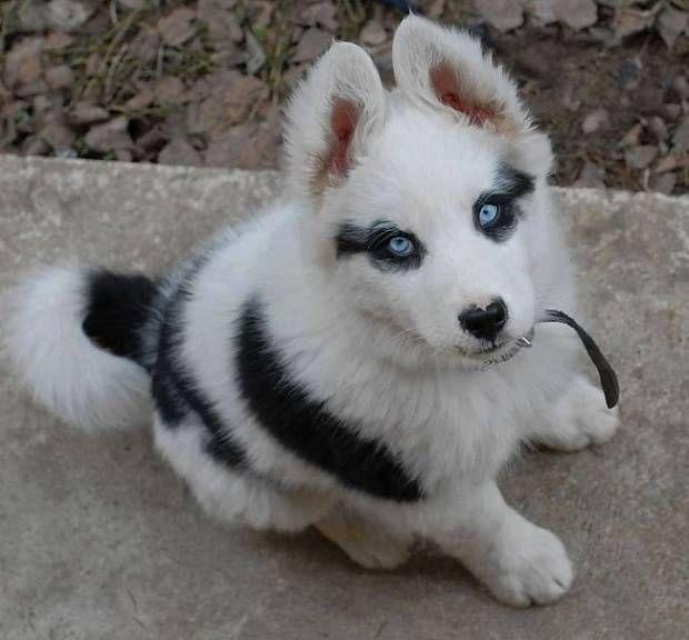 Фото: Смешные фото собак: «Веселый окрас – подарок от природы», фотографии, картинки, изображения, - Joinfo.ua