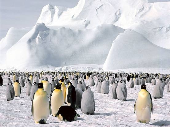 A journey to Antarctica is the ultimate photographic wilderness experience, offering a wonderful combination of stark, natural beauty and abundant wildlife. Follow in the footsteps of some of the world's greatest explorers – Scott, Shackleton and Amundsen – to discover a land of unsurpassed beauty and majesty. #mike1242