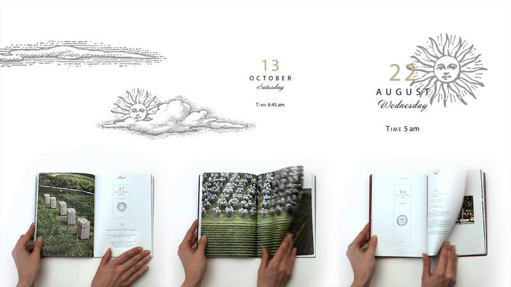 """A #video on the """"Allegrini Harvest Diaries"""", a memoir on the life in the Allegrini Estates during #harvest. Art direction by Hangar #Design Group."""