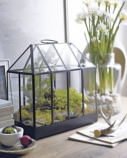 """modern terrarium from crate & barrel (hate the word """"modern"""" but that's how they played it)"""