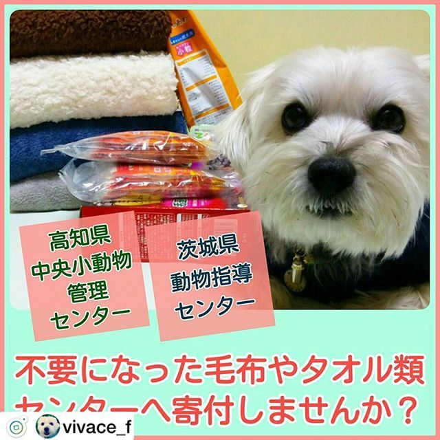 連投になりますがリポストさせてください🙇♀️ . #Repost @vivace_f . .前回、寄付をお願いした茨城県動物指導センターに加え、高知県中央小動物管理センターへの寄付もお願いいたします🙇 どちらのセンターも、殺処分の可能性がある犬や猫が多く収容され、毛布やタオルが不足しております。どうか皆さまのご協力をお願いいたします🙏 . 100円ショップ「DAISO」でカイロや150円~300円程度のブランケットが売られていたので、私も再送します。 西日本在住の方は高知県のセンターへ、東日本在住の方は茨城県のセンターへ送られると、送料の節約になるかと思います📦 もちろん、両方へ送るのが一番ですけどね💚 . ❶【高知県中央小動物管理センター】 感染病予防の為、タオルは使い捨てとしており、収容頭数に比例してタオルの消費が多くなります。防寒用・排泄物を取り除いたり、様々な用途で使用します。 . 《📦 支援をお願いしたい物資》 💝 タオル (洗濯済みのもの・慢性的に不足) 💝 バスタオル (洗濯済みのもの) 💝 ブランケット類 (洗濯済みのもの) 💝 毛布…