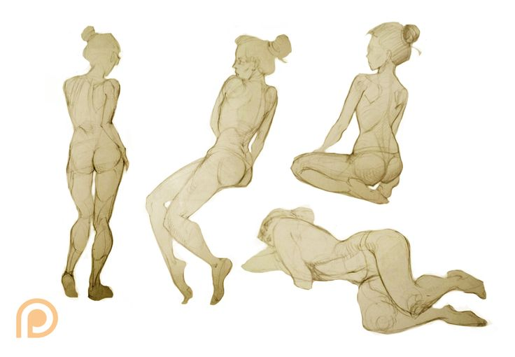 Anatomy sketches by Nieris on DeviantArt