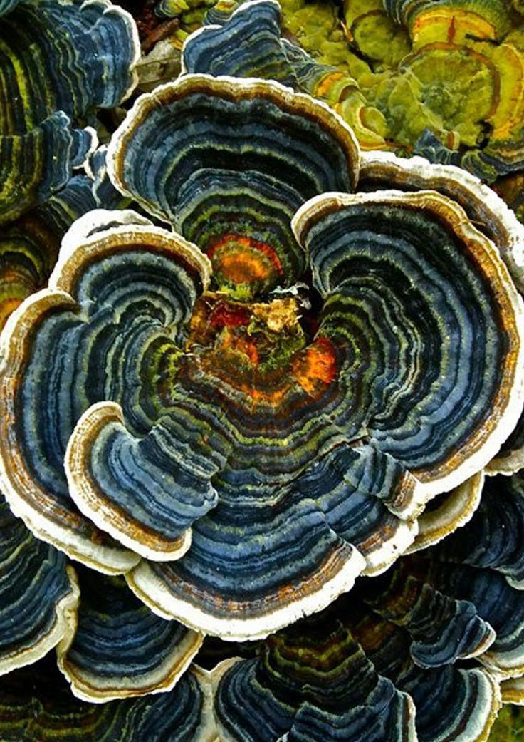 Pentland. Fungus - Hanna Bytes: October 2011