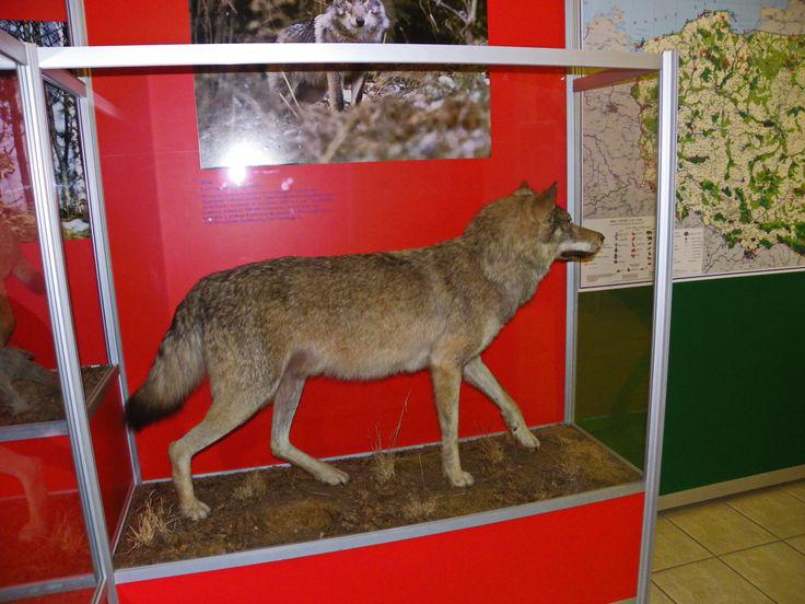 """Gołuchów Park - """"Powozownia""""- Muzeum Leśnictwa"""