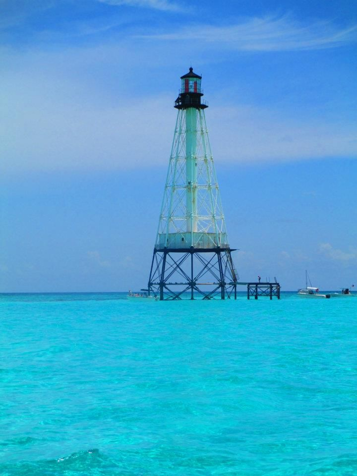 40 Best Florida Coral Reefs Images On Pinterest
