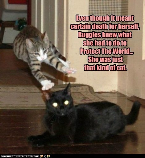 basement cat on pinterest fat cats funny evil cats and funny